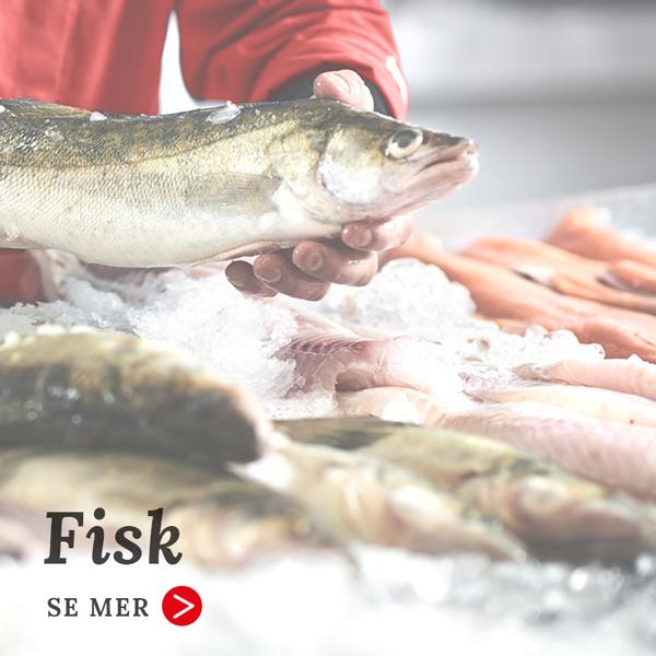 fisk-2-600x600